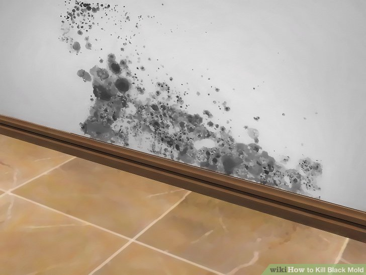 Fighting Mold: When To Call In Experts